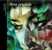 portada-rosa-candida21